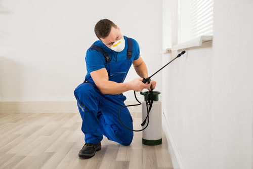 a technician performing pest control in essex