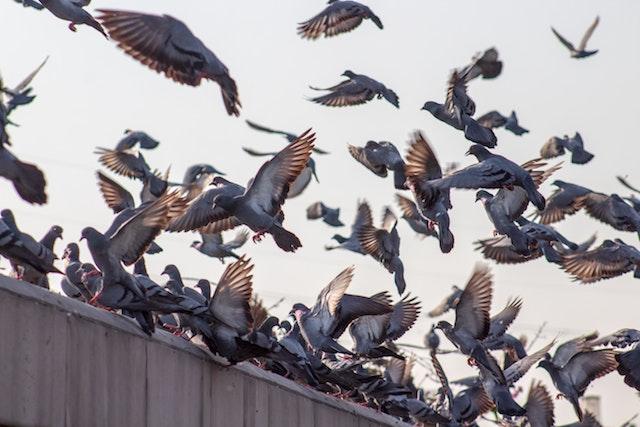 bird control essex business