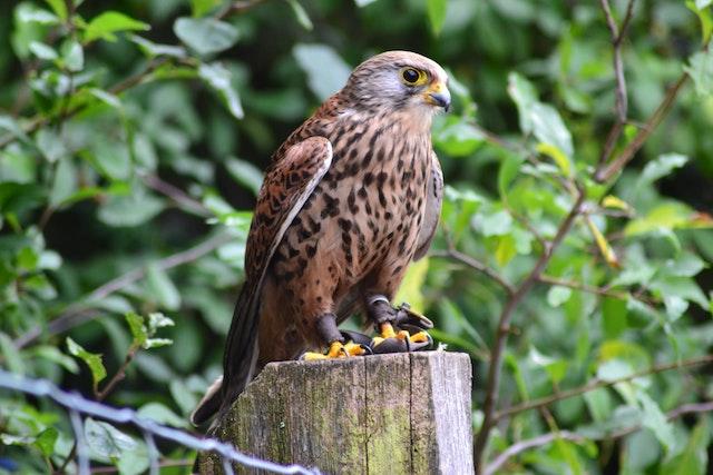 falcon statue in essec garden