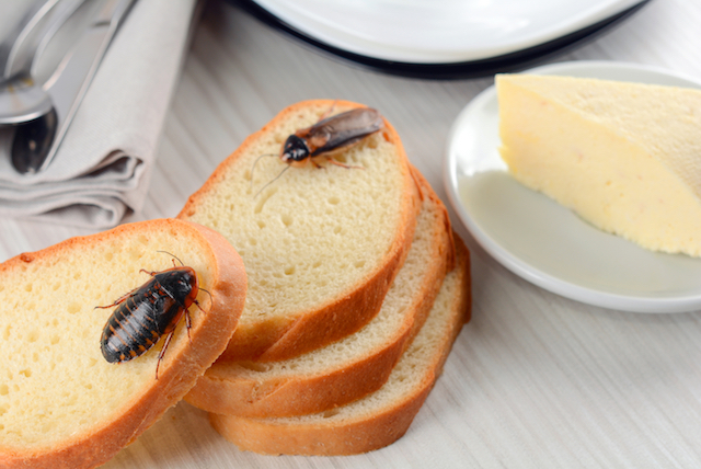 cockroaches on bread