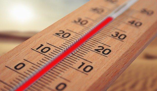 heat treatment kills insects