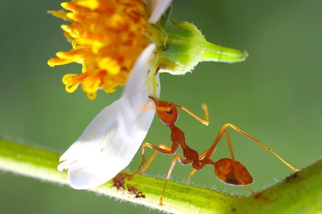 really strong ant