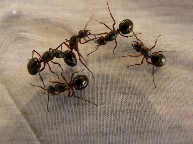 ants in a colchester house