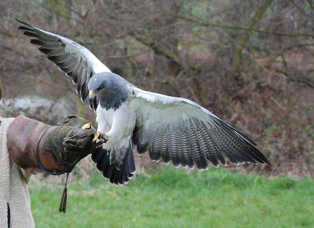 Pest Control Birds Of Prey
