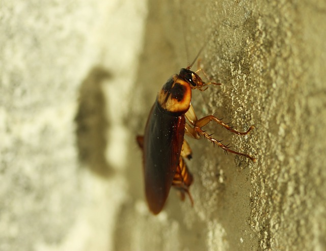 cockroach on wall in southend