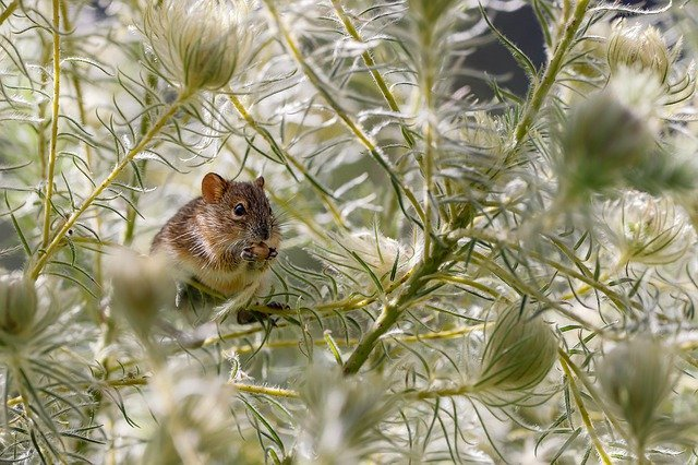 mouse outdoors