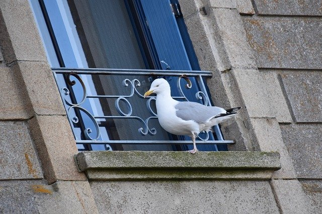 seagull on someones house