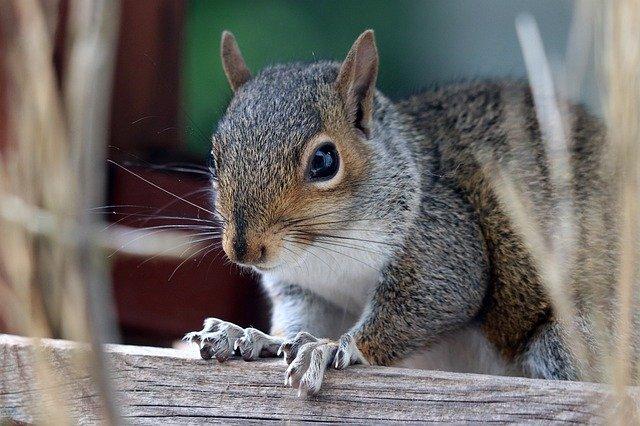 squirrels cause damage