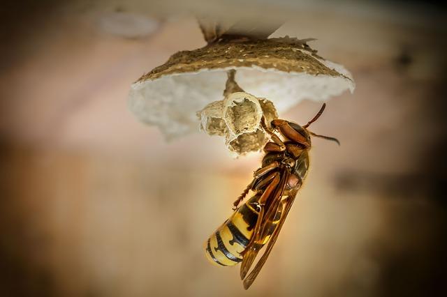 queen making nest