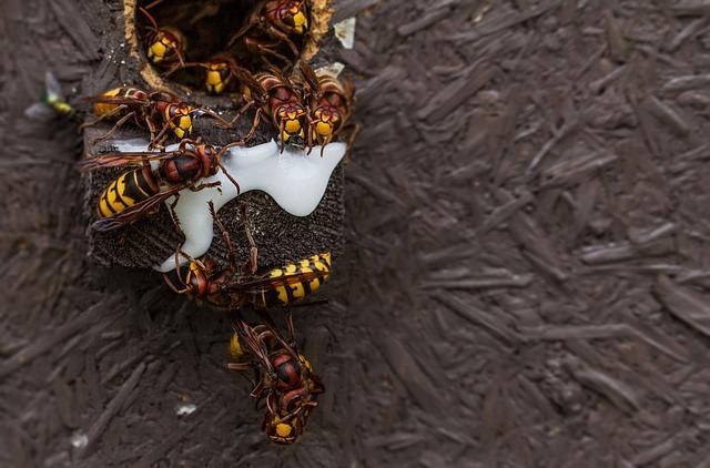 wasps together