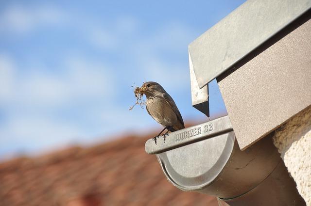 bird nesting gutter