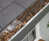 pests affect gutters
