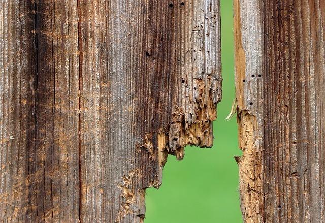 holes in wood
