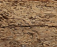 signs you have woodworm